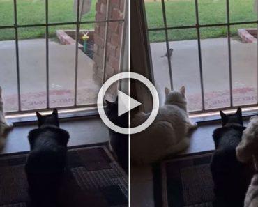 Esto resume perfectamente las diferencias que hay entre perros y gatos. ¡Hilarante!