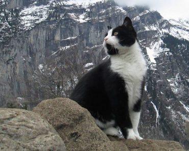 Un hombre se perdió en las montañas y encontró el camino de vuelta gracias a este misterioso gato