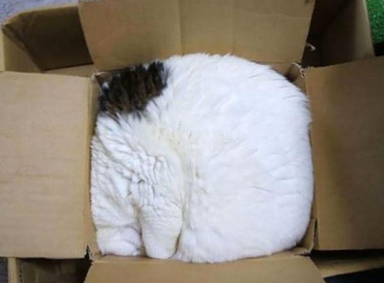 15 gatos locos que dominan seriamente el arte de dormir la siesta en cualquier lugar