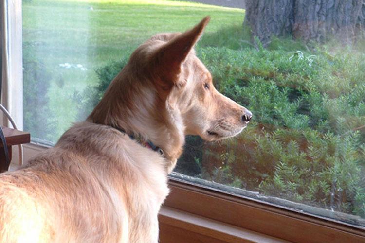 Este perro tiene el corazón roto al no ver a su amiga gata, hasta que su dueño escribe una nota
