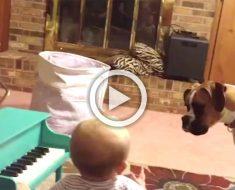 Papá sorprende al perro de la familia cantando a dúo con el bebé y su video se hace viral