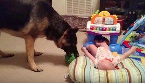 Escuchó las risas del bebé sin esperar a que se estuviera divirtiendo con el perro