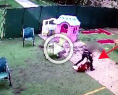 El perro de este vídeo tuvo que ser sacrificado tras el maltrato por parte de un empleado