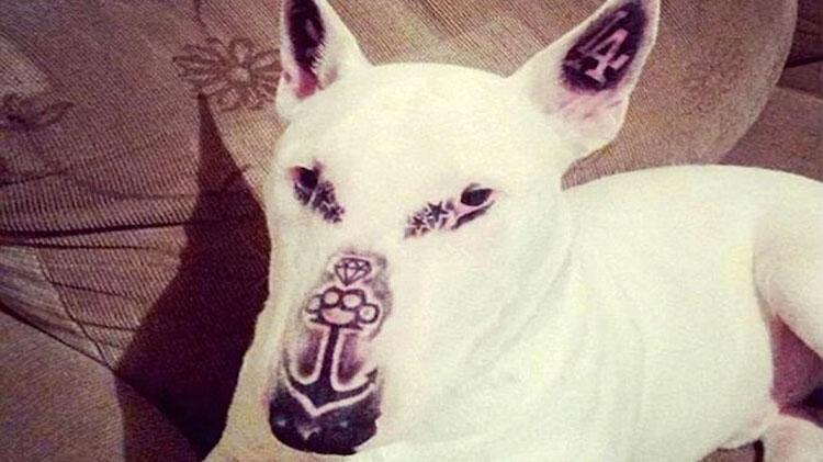 Este hombre está acusado de maltrato animal por tatuar dolorosamente a su propio perro