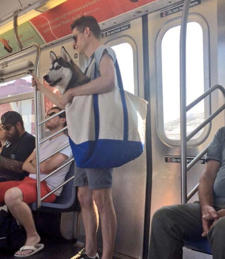 Los perros tiene prohibido ir en el metro de Nueva York a menos que vayan en una bolsa [15 FOTOS]