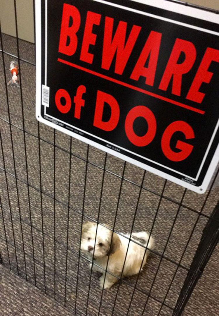 """14 perros """"peligrosos"""" detrás de señales de """"Cuidado con el perro"""". Mucha atención al #10"""