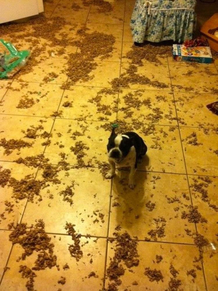 16 perros que no esperaban que sus dueños volvieran a casa tan temprano. Atención al 11