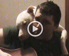 Canta a su Pitbull una canción original, y su perro reacciona de la manera más dulce imaginada