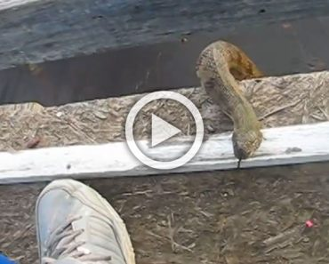 Lo que hace esta serpiente de agua cuando ve a este hombre desconcierta a todo el mundo