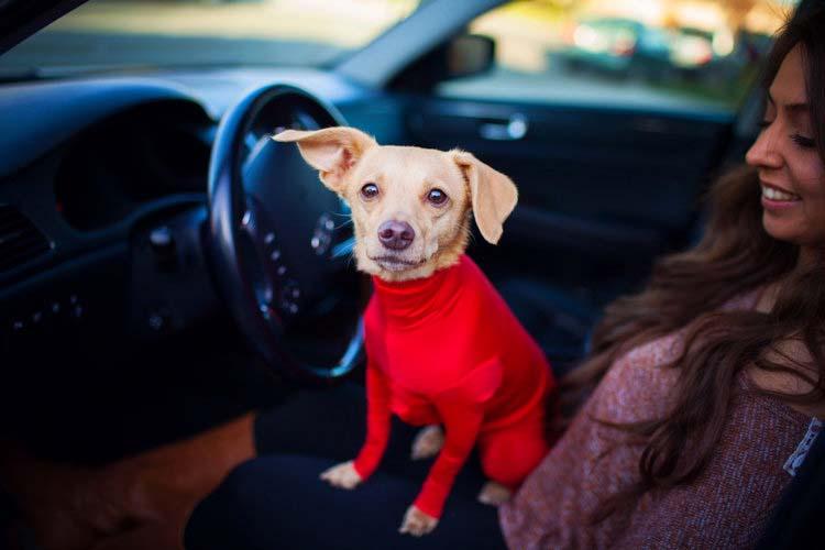 Estaba frustrado por los pelos del perro en el coche, así que inventó estos leotardos para perros