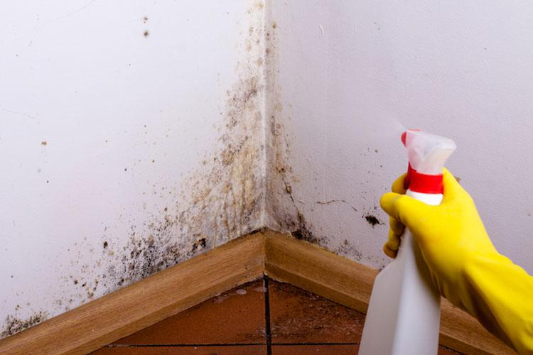 Este aerosol natural elimina definitivamente el moho del hogar. Garantizado