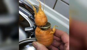 Un jardinero ve algo brillante en una zanahoria y se da cuenta de que es algo que había perdido