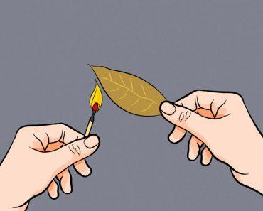 Esto es lo que sucede si quemas una hoja de laurel en tu casa y esperas unos minutos