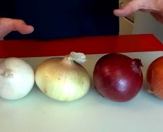 La mayoría de la gente cocina las cebollas de forma errónea, este chef explica qué hacer con cada una