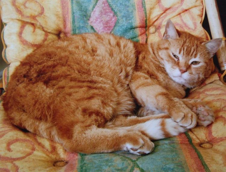 Su gato se tumbaba sobre su estómago. Hasta que los médicos descubrieron que tenía cáncer