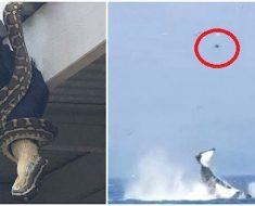 13 imágenes impactantes que muestran que la naturaleza es en realidad aterradora...