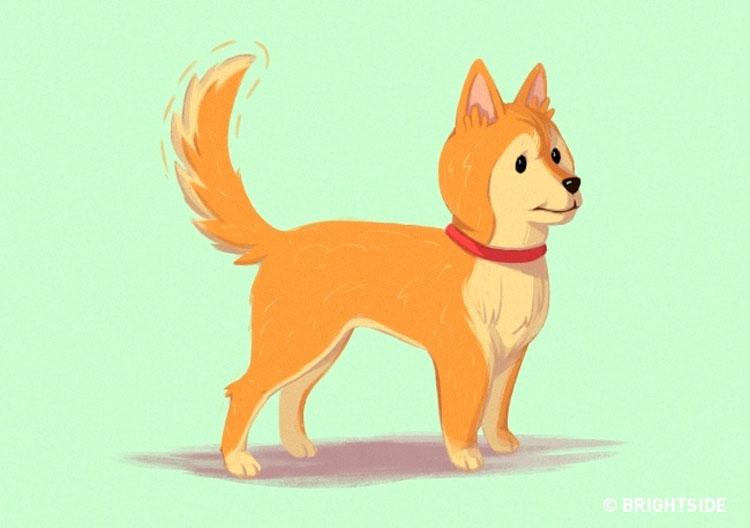 16 pistas útiles para cualquiera que quiera entender mejor a los perros