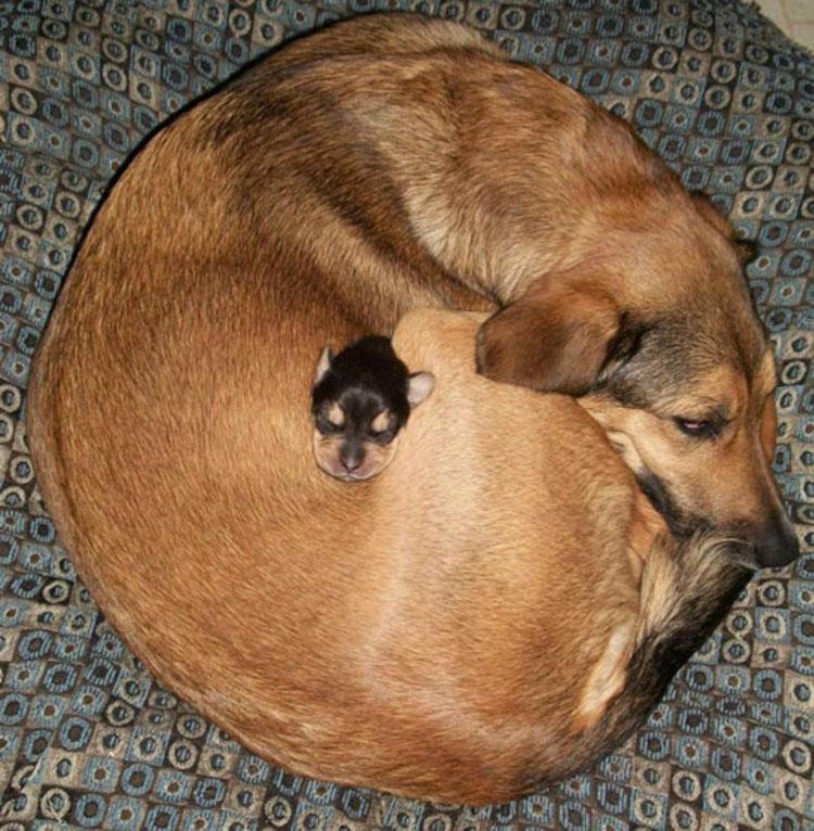 Los mini-perritos son reales - y están a punto de conquistar el mundo...