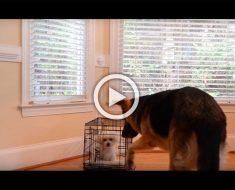 Su perrito siempre se escapaba, así que su dueña puso una cámara. La grabación es hilarante