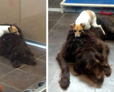 Estos perros fueron abandonados y no dejan de abrazarse el uno al otro en el refugio, son inseparables