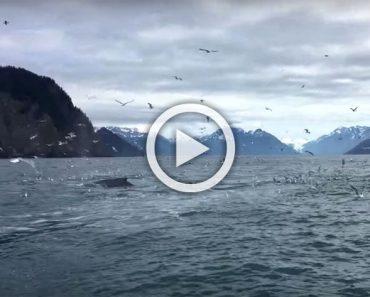 Este hombre filmaba a una gaviotas y capturó un acontecimiento realmente asombroso