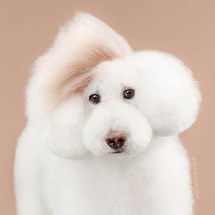 No te pierdas estas imágenes de perritos antes y después de su corte de pelo (16 imágenes)