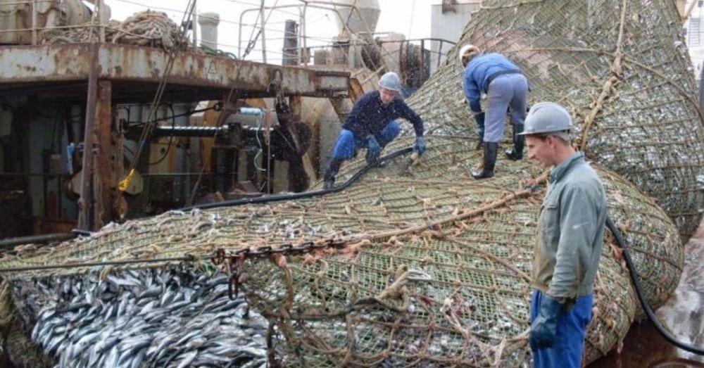 Pesca Comercial Red