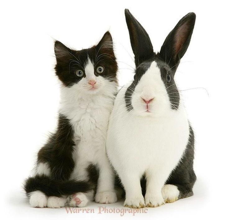 13 parejas de animales que parecen ser hermanos. Atención a la pareja 9