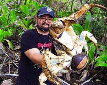 Se ha encontrado una aterradora teoría sobre los cangrejos cocoteros - Y no es agradable 1