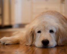 Si tienes un perro entenderás esta emotiva carta de un perro que está dando la vuelta al mundo