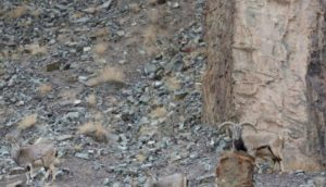 ¿Puedes encontrar al peligroso depredador que se esconde en esta foto antes de que sea demasiado tarde?