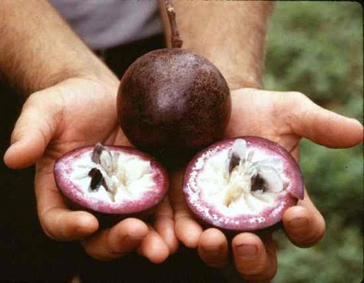 Estas 20 frutas de todo el mundo son tan extrañas que la mayoría de la gente no sabe que existen