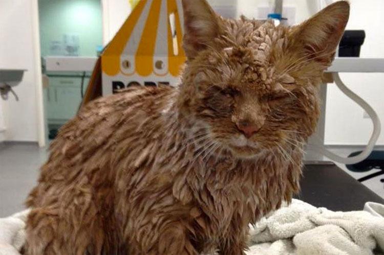 Unos criminales cubrieron de cemento a este gato. Ahora mira el aspecto que tiene hoy