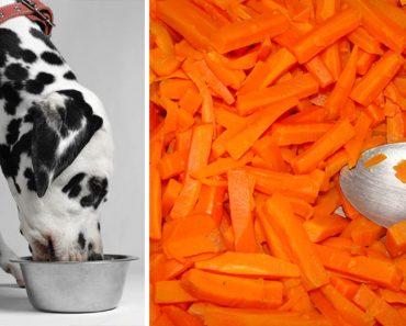 8 alimentos saludables con los que debes alimentar a tu perro