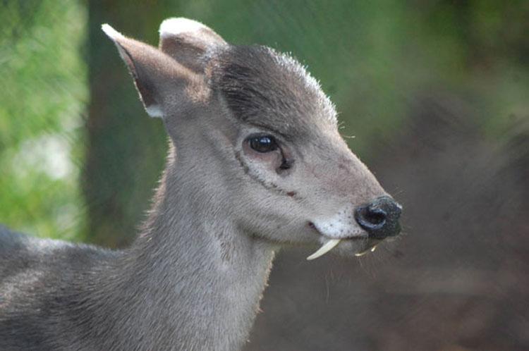 37 Animales extraños que usted (probablemente) no sabía que existían...