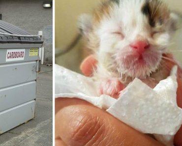 Escuchó a un gatito maullando en un contenedor, después el veterinario dijo que es un gato extremadamente raro