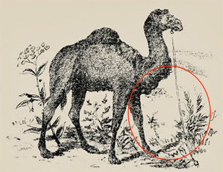 ¿Puedes detectar al hombre escondido en esta ilusión óptica creada en 1880?