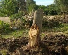 Aldeanos argentinos se quedan atónitos después de ver que la imagen de Jesús aparece en un árbol
