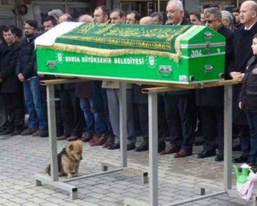 Un perro se sienta con ojos tristes bajo el ataúd - lo que sucede a continuación derramó lágrimas