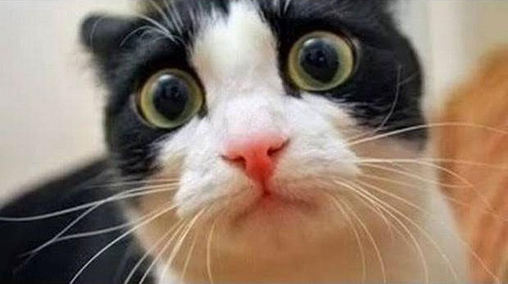 TODO UN RETO: ¡Intenta ver esto SIN REIRTE! Sí, son los gatos más graciosos del mundo