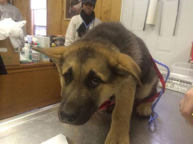 Las 12 fotos más divertidas de mascotas que se dan cuenta de que están en el veterinario