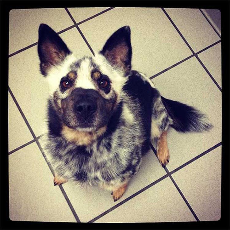 33 perros únicos que le harán soñar. ¡El séptimo es realmente nuestro favorito!