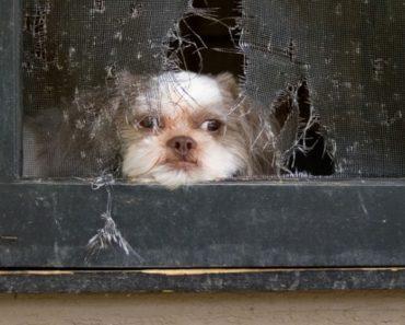 Científicos revelan lo que le sucede a su perro cuando usted lo deja solo durante todo el día