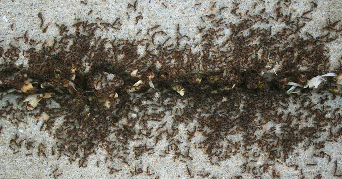 ¡Espolvorea ESTA especia por tu casa y nunca verás otra hormiga otra vez!