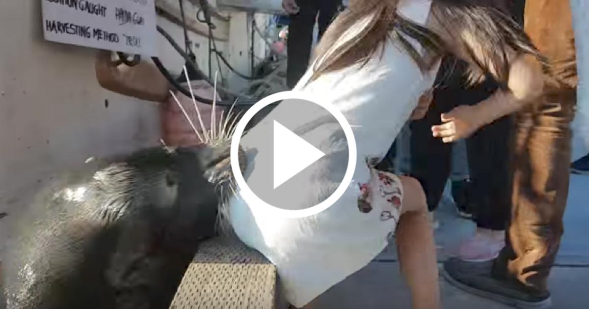 El impactante video que muestra el momento en que un león marino ataca a una niña