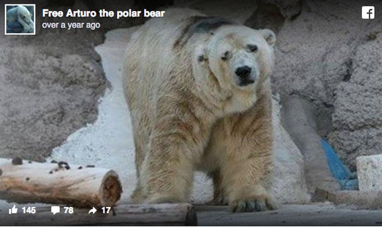 El oso polar más triste del mundo muere después de 22 años en un foso de hormigón