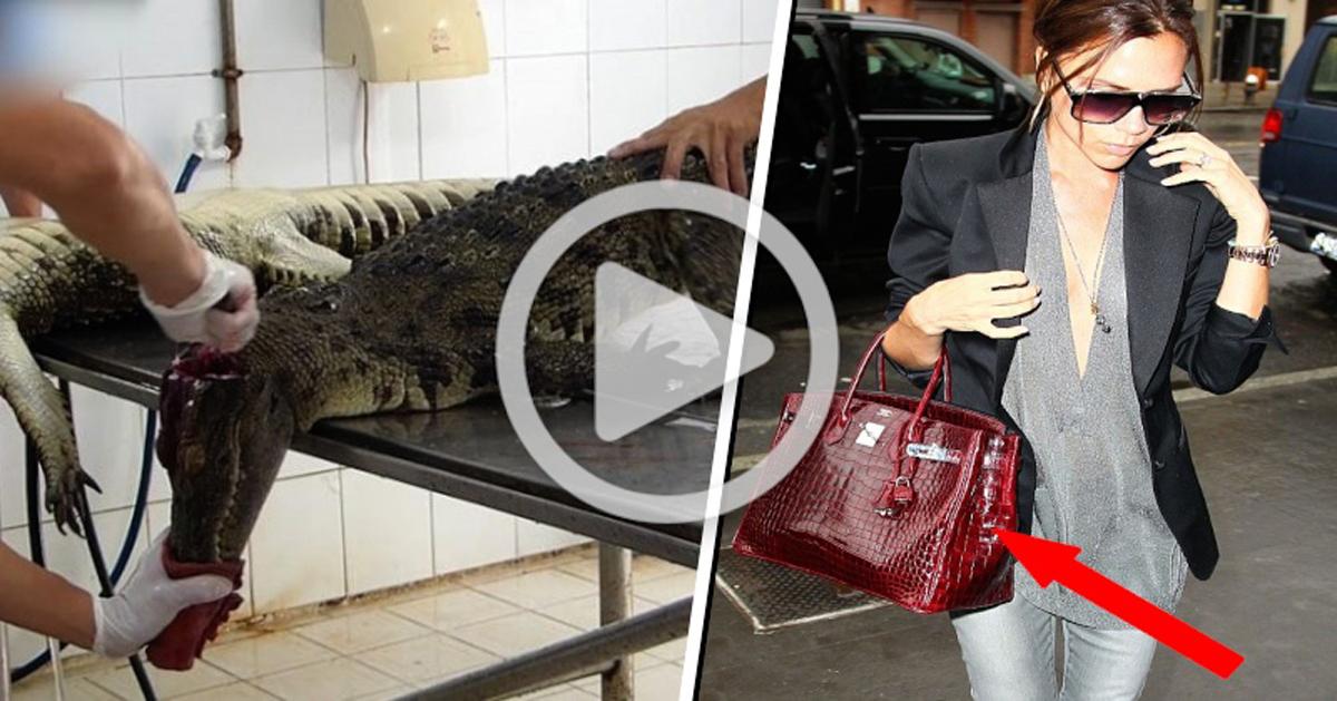 Video clandestino expone el horrible orígen de algunos bolsos y zapatos de lujo