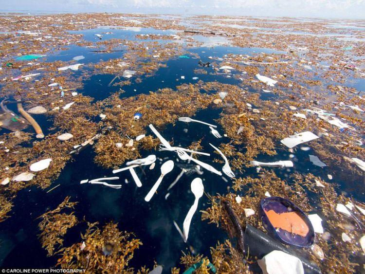 Imágenes increíbles muestran lo que se esconde en medio de nuestros océanos