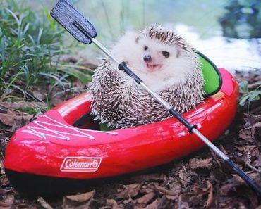El pequeño Azuki se va de camping, y sus fotos es lo mejor que hoy verás en Internet 1