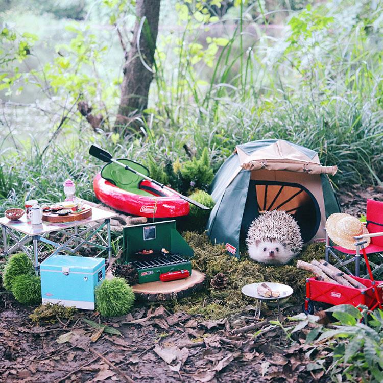 El pequeño Azuki se va de camping, y sus fotos es lo mejor que hoy verás en Internet